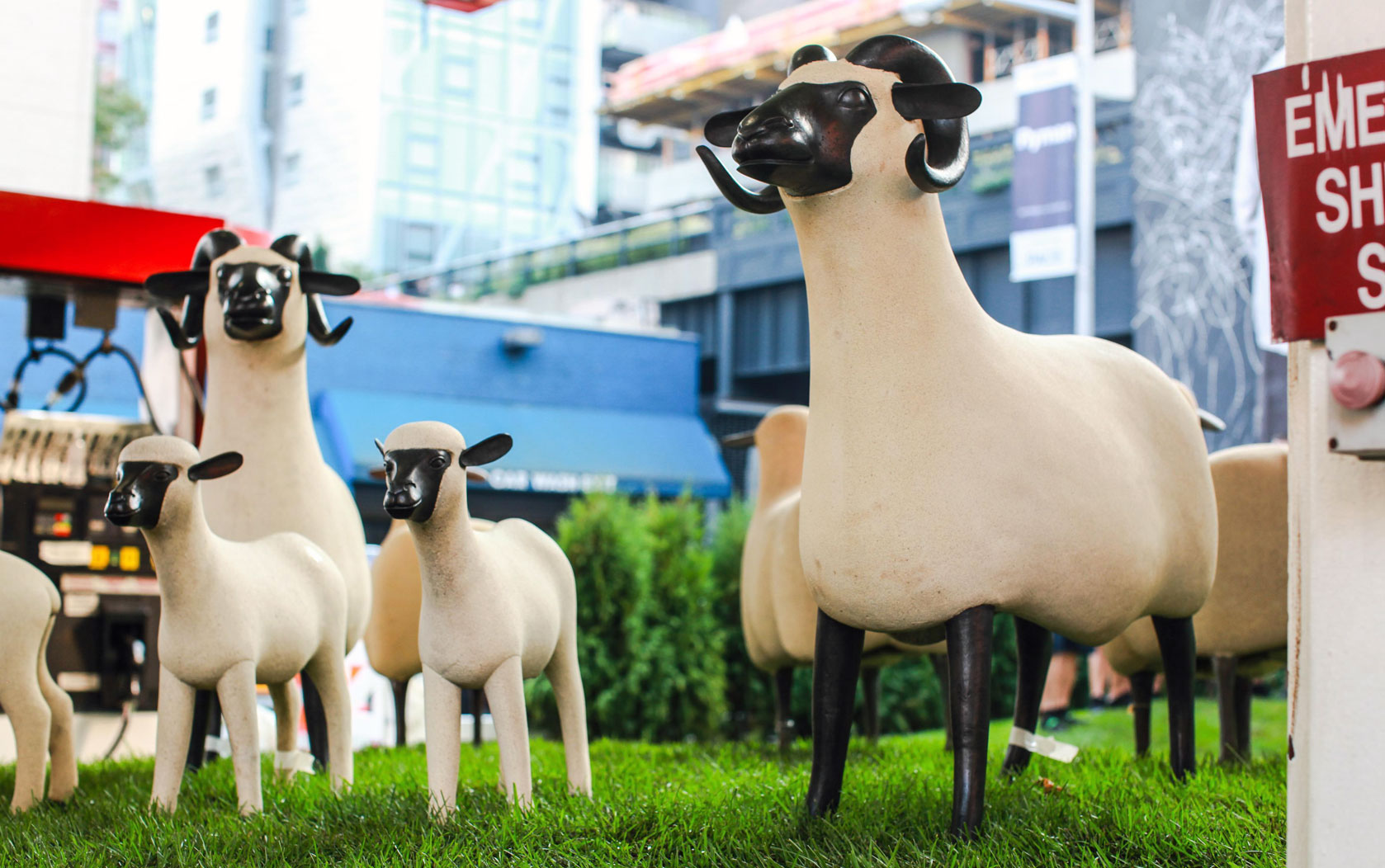 sheap_family1